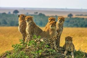 Kenia 2007